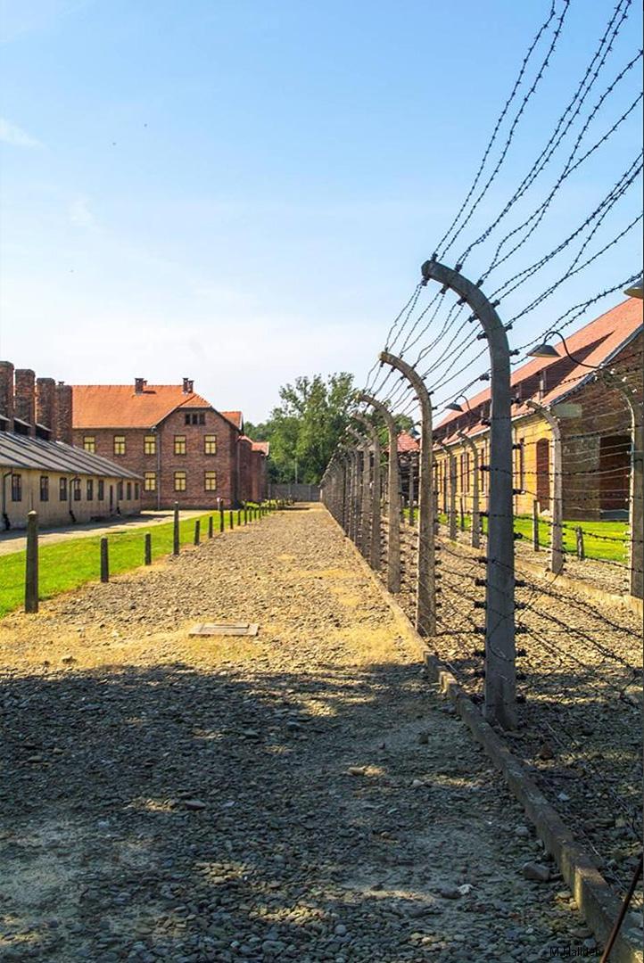Auschwitz (4)