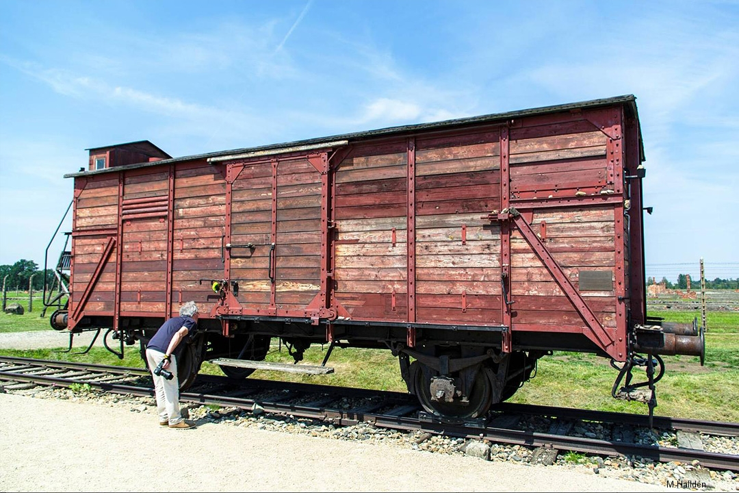 Birkenau (3)