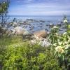 Gotland (23)