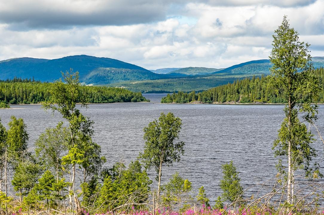 Norra Jämtland (37)
