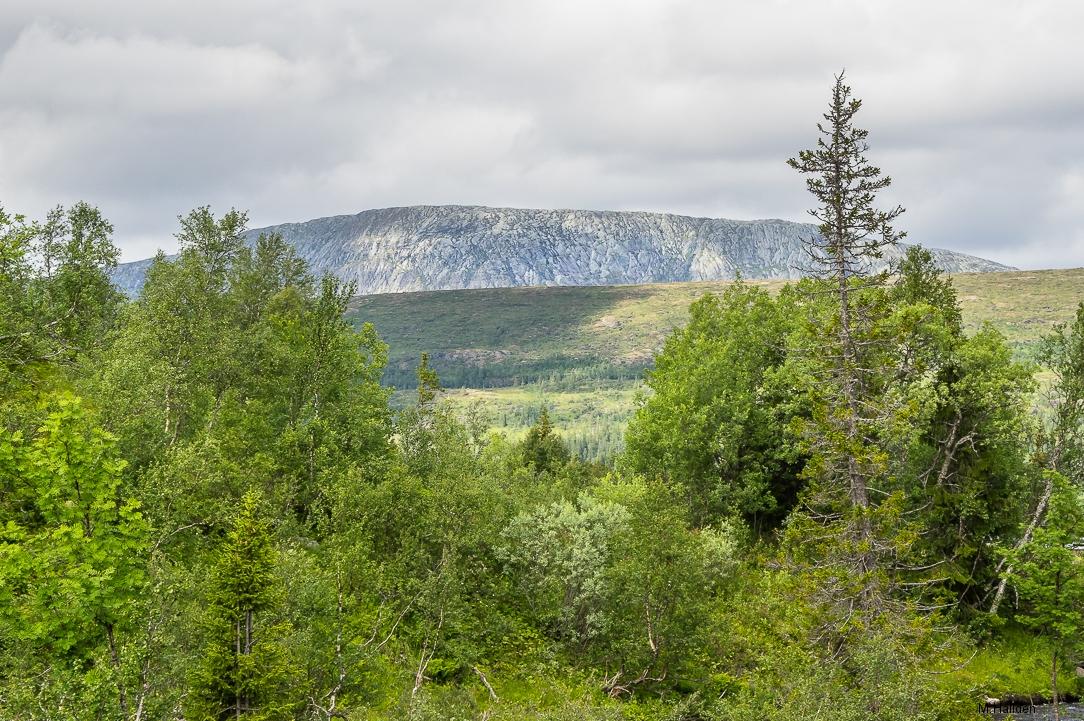 Norra Jämtland (45)