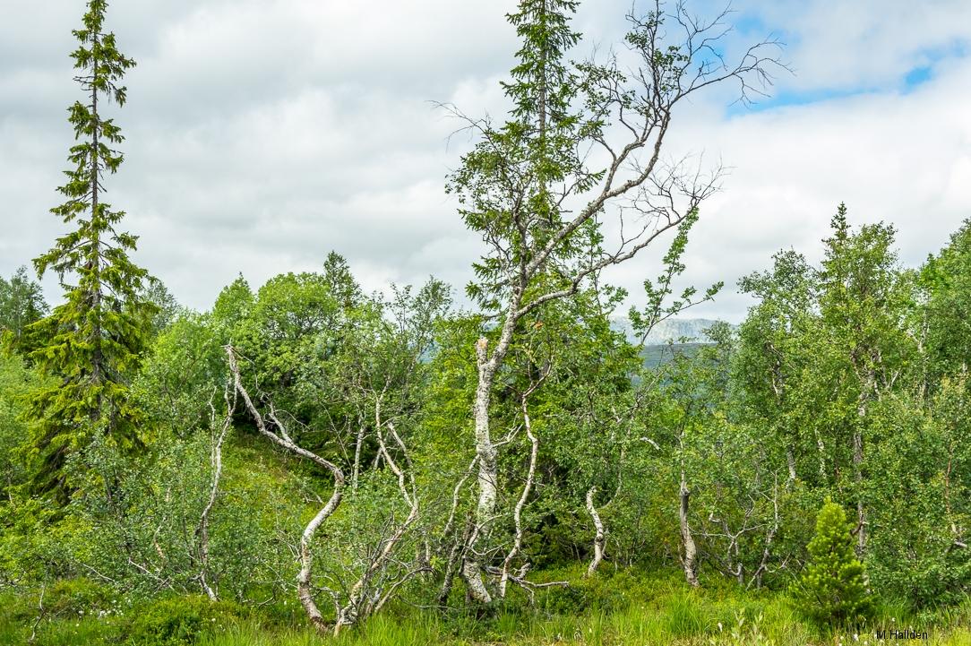 Norra Jämtland (46)