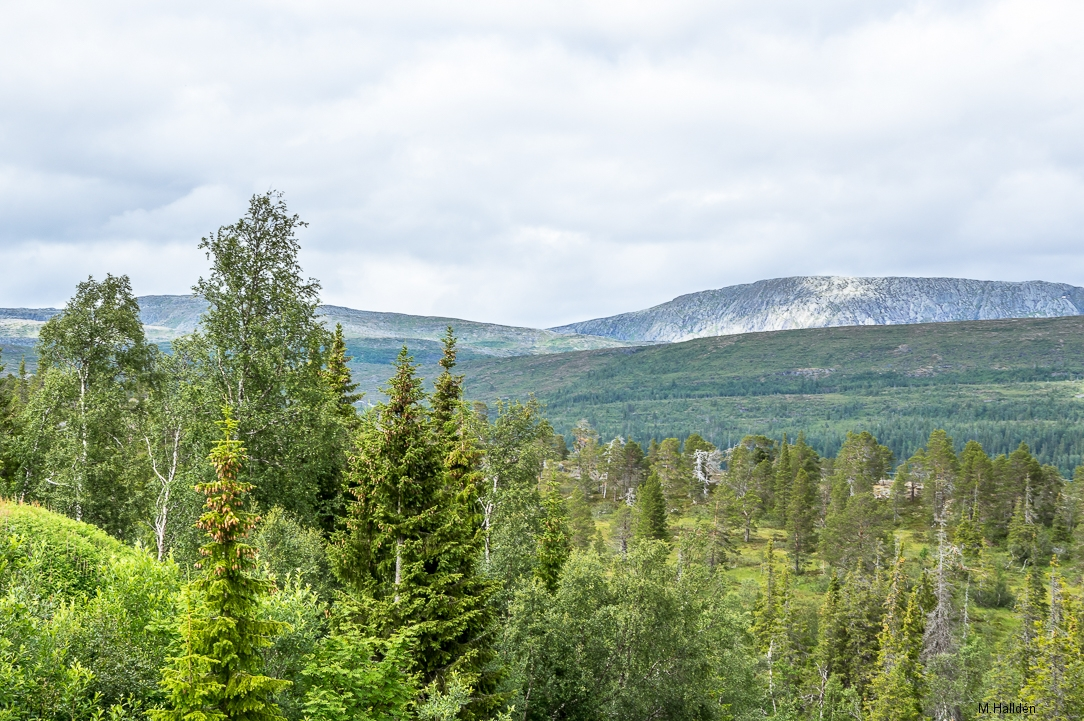 Norra Jämtland (48)