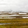 Norra Jämtland (81)