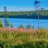 Norra Jämtland (90)